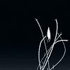 spiderpig: (speed of light // hoshi no koe)