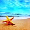 megatronix: (starfish)