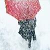 luciferous: (faiz; snow means death)