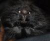 catyak: Upside-down Cake (Vampire Kitty)