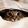 alifeofourown: (Newspaper Kitty)