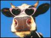 weesaw: cow wearing heart sunglasses (Default)
