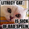 """dipping_sauce: A LOLCAT of a white cat on a stack of books, with the caption """"LITRECY CAT IS SICK OF BAD SPELIN"""" (litrecy cat)"""