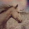 la_samtyr: white horse (Asfaloth)