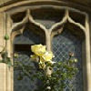 la_samtyr: yellow rose against arched window (window and rose)