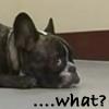 """matataku_hoshi: (Finch """"what?"""")"""