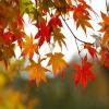 murgy31: (Fall leaves)
