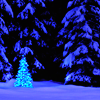raveness: (christmas tree)