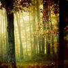 sorrow_angel: (Forest)