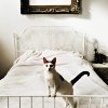 quartzwolf: A kitty on a bed (Kitty on bed)