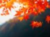 pshaw_raven: (Autumn Leaves)