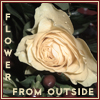 wednesday: (flower from outside)