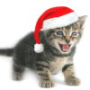 jenna_marianne: (Christmas Kitty)