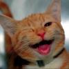 jenna_marianne: (cat winks)