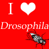 sangre_fria: (Drosophila)