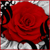 sangre_fria: (Red Rose)
