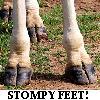 "reginagiraffe: Close-up of giraffe feet. ""Stompy Feet!"" (Stompy Feet!)"