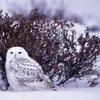 ifyouarebrave: (Winter white)