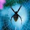 wildeabandon: A spider in its web (spider)
