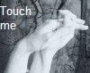 "wildeabandon: Two hands interlinked with text ""touch me"" (touch me)"
