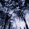 wildeabandon: Dark, ominous shadows of trees. (shadows)