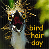 jenlev: (bird hair day by salieri)