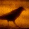sepiaepiphany: (Crow)