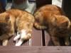 alidiabin: (Cats)