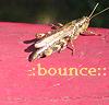 cofax7: grasshopper bounce (Bounce)