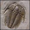 trilobites: (Default)