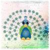someone: (peacock)