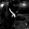 supervisor194: (isis - sitting primly as kitty)