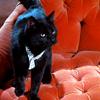 supervisor194: (isis - pretty kitty kitty)
