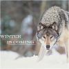 gehayi: (winteriscoming (sasha_davidovna))