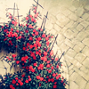 ashacrone: (roses) (Default)