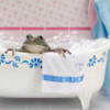sebfish: Photo of a frog in a frog sized bathtub in a tiny pink bathroom. (bath, bathtub, frog, pink)