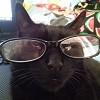 moonythejedi394: (cat, funny, glasses)