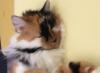 gardenvarietyunique: (cat)