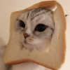 grzanka: photo of a white cat with its' face stuck through a piece of bread (Default)