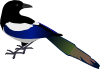 shy_magpie: A Magpie (Magpie)