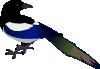 shy_magpie: A Magpie (Default)