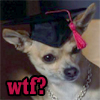 ursamajor: Cher's puppy from Clueless (wtf?puppy)