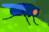 viktornowalsk: blue-and-green cartoon of an adult Dermatobia hominis fly (Default)
