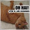 crazy_catlady: (Default)