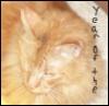 redrikki: Orange cat, year of the cat (Default)