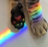 sisceal: Photo of a cats paws, overlaid with a refracted rainbow (Rainbow Paws)