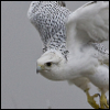 bondedgryphon: (Flight)