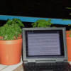 hourlyprompts: A laptop next to some potted plants (Hourly Prompts Icon)