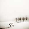 nightdog_barks: A double track leads through a field of snow into a dark forest (Path into snow)