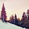 thady: (DIV  -  Winter Trees)